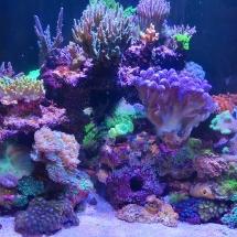 Reefer170 nach ca. 3 Jahren